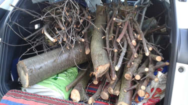 Peugeot 3008 - long term update trees