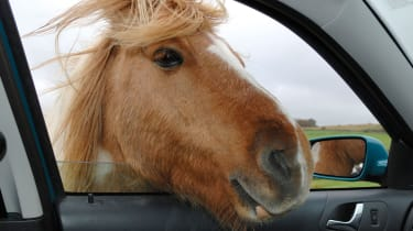 Horse car window