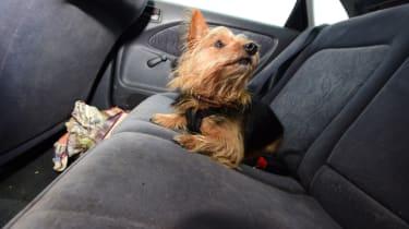 Used Toyota Avensis dog on back seats