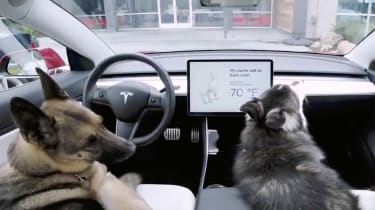 Tesla dog mode