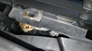 Squirrel trapped in car engine