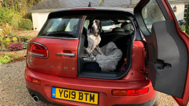 MINI Clubman long term - dog