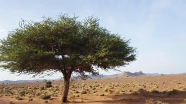 Nissan NP300 Navara pick-up dune - savannah