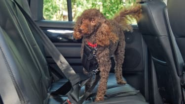 Pets at Home Car Safety Harness