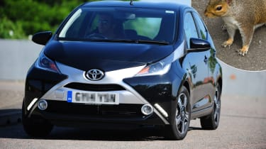 Toyota Aygo with squirrel