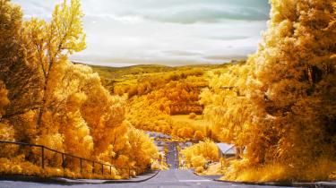 Record breaking roads - Baldwin Street, New Zealand
