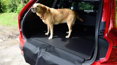Volvo XC90 long-term test - dog
