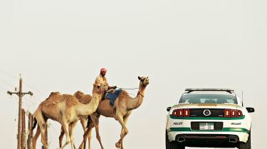 "<b>Dubai Police Fleet</b><span>&nbsp;&nbsp;</span>  <span>Sizzling 575bhp Shelby Mustang 'panda car' meets </span><span style=""font-size: 0.8125em;"">locals as we take&nbsp;</span><span style=""font-size: 0.8125em;"">a ride in amazing D"
