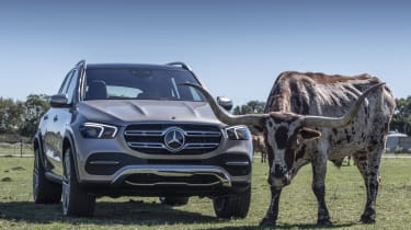 Mercedes GLE with cow